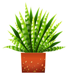 A houseplant with a pot