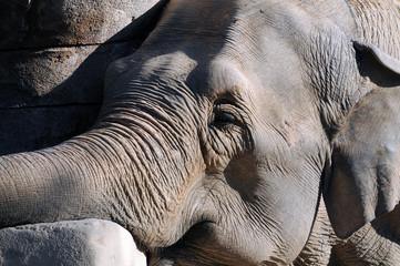 Elefante descansando