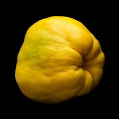 yellow quince fruit isolated