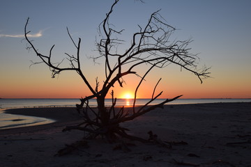 Dawn in the Driftwood Tree