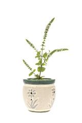 Mint vase isolated on white
