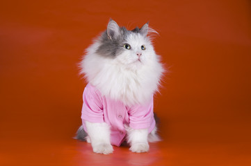 cat in a pink jacket on orange background