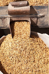 Rice in milling machine