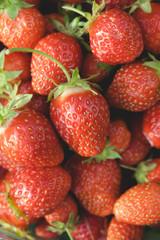 Garden strawberries close-up