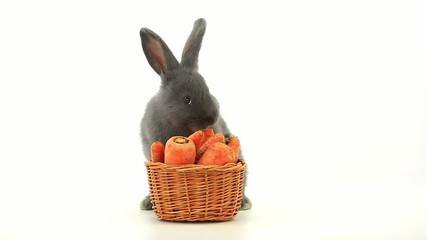 gray rabbit with a basket eats carrots