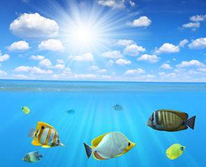 Tropical reef fish in sea