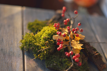 moss and viburnum