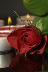 rote rose und kerzen