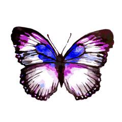 butterfly235