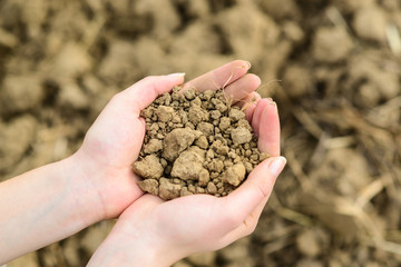 Soil in hands - Environment or agriculture concept