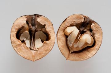 open walnut on white background