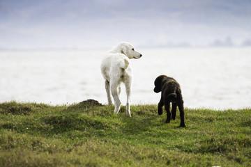 Dogs at coast