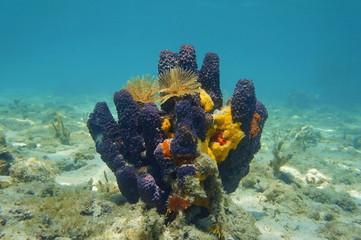 Colorful sea sponge underwater in the Caribbean