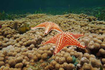 Starfish underwater on coral reef Caribbean sea