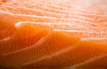 fish fillet salmon