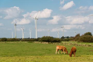 Windkraftanlage mit Kühen