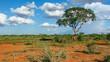Landschaft in Tsavo, Kenia