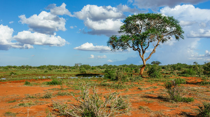 Landschaft in Tsavo, Kenia