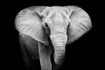 Elephant © art9858