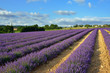 Provence countryside