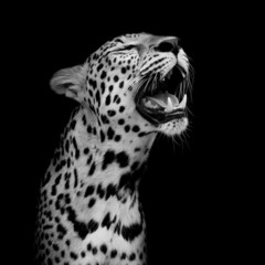 Leopard portrait © art9858