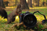 Curious brown squirrel with camera