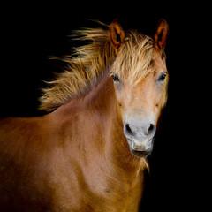 Back shot of a horse
