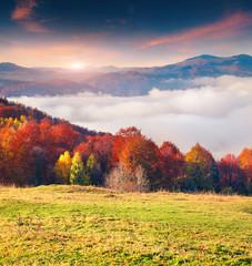 Colorful autumn morning in the Carpathian mountains. Sokilsky ri