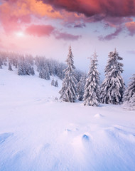 Beautiful winter sunrise in the mountain forest.