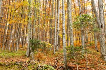 Beautiful autumn season forest