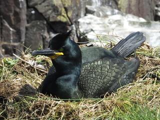 Shag On Nest