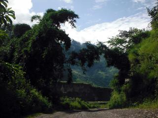 Bamboo Covering Himalayan Trekker's Trail