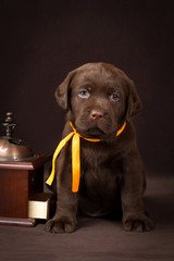 Chocolate labrador puppy sitting on brown background near wooden