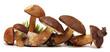 Leinwanddruck Bild - Wild Foraged Mushroom selection isolated on white background,