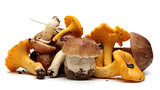 Wild Foraged Mushroom selection isolated on white background,