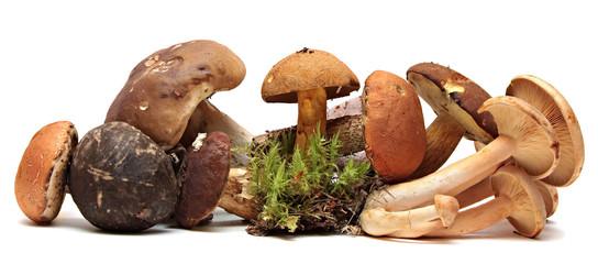 Wild Foraged Mushroom selection isolated on white background,