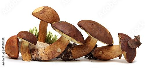 Leinwanddruck Bild Wild Foraged Mushroom selection isolated on white background,