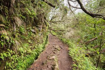 Levada of Caldeirao Verde, Madeira (Portugal)