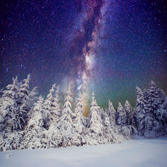 Starry sky and trees in hoarfrost