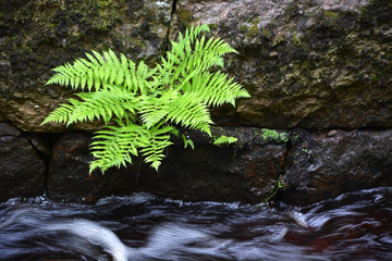 Small fern at the creek