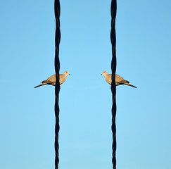 Two birds on a electric wire