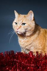 christmas cat portrait