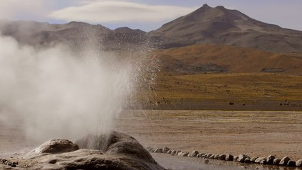 El Tatio geyser, 4320 meters above sea level, Chile.