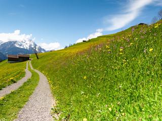 Weg durch die Frühlingswiese am Berg