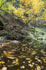 赤目渓流に流れる落ち葉