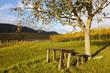 canvas print picture - Herbst in den Weinbergen bei Siebeldingen in der Südpfalz