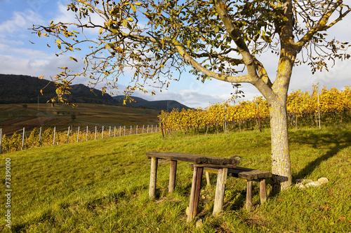 canvas print picture Herbst in den Weinbergen bei Siebeldingen in der Südpfalz