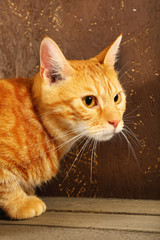 Red cat on wooden box on brown wall background