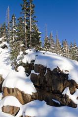 light make a trees shadow in snow, colorado