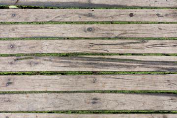 wood floor panel texture with green moss